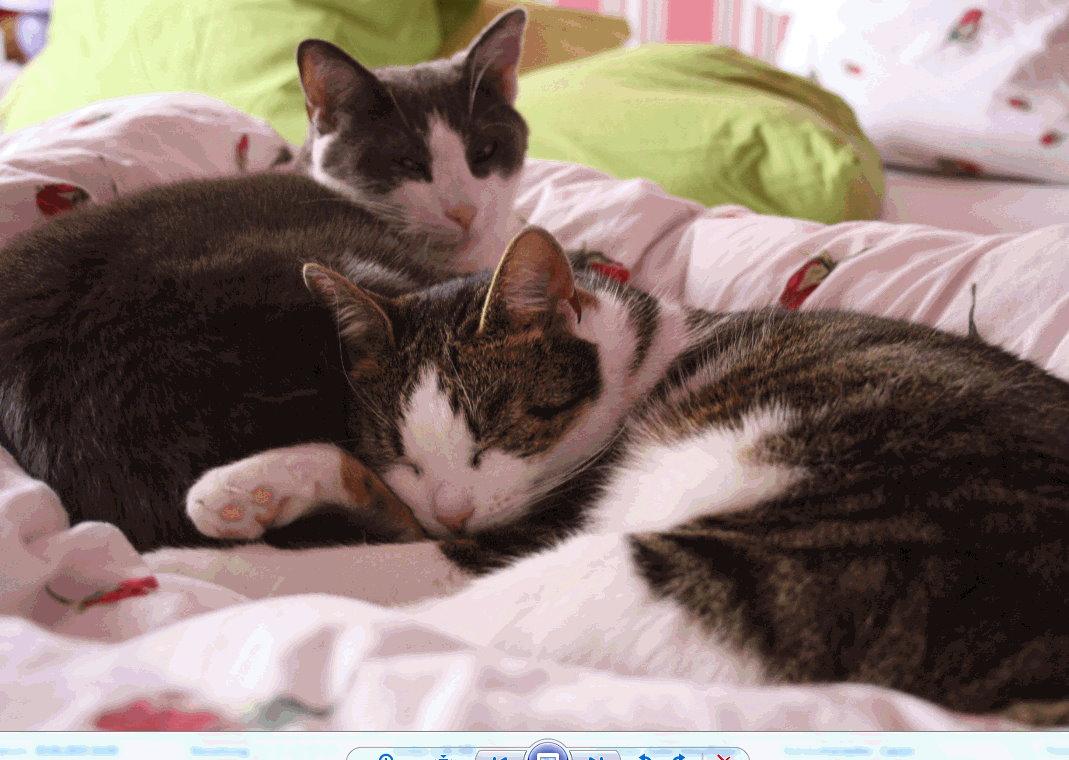Unsere_Katzen_Kinder_Nala_und Balu