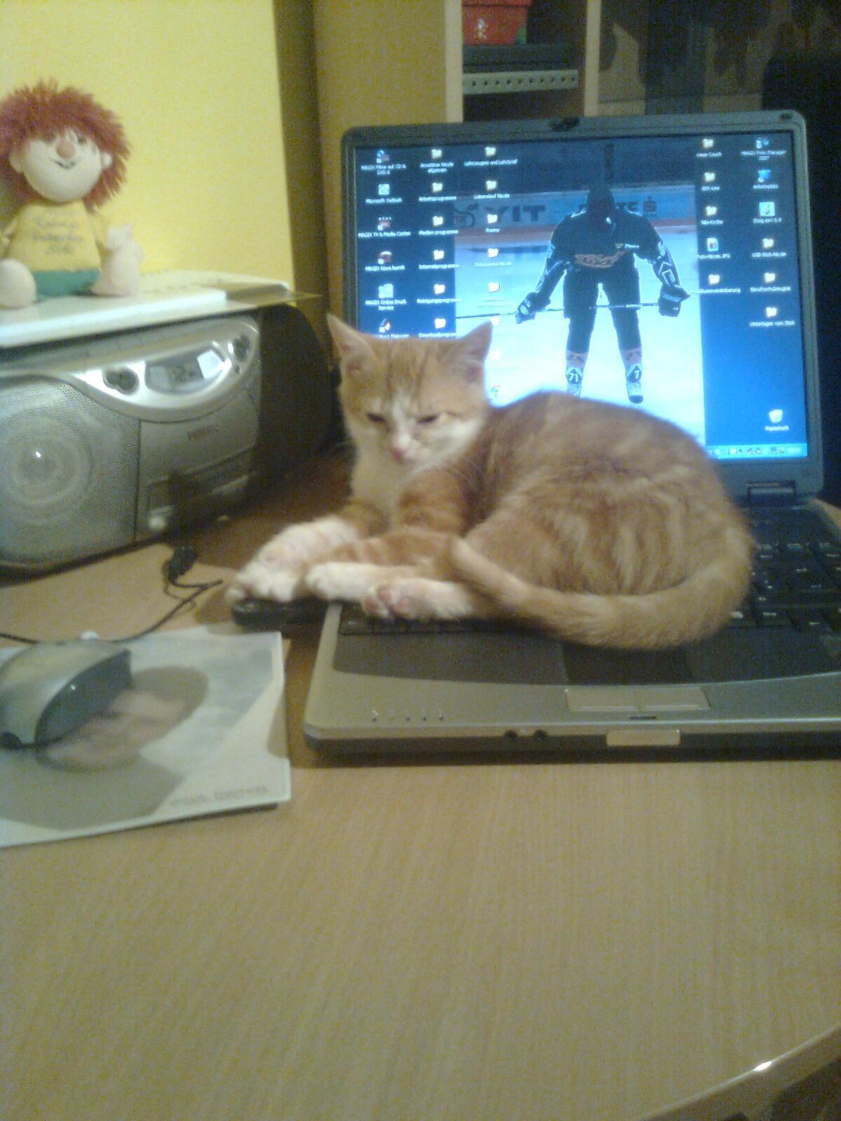 Garfield_Hoerergalerie_bild